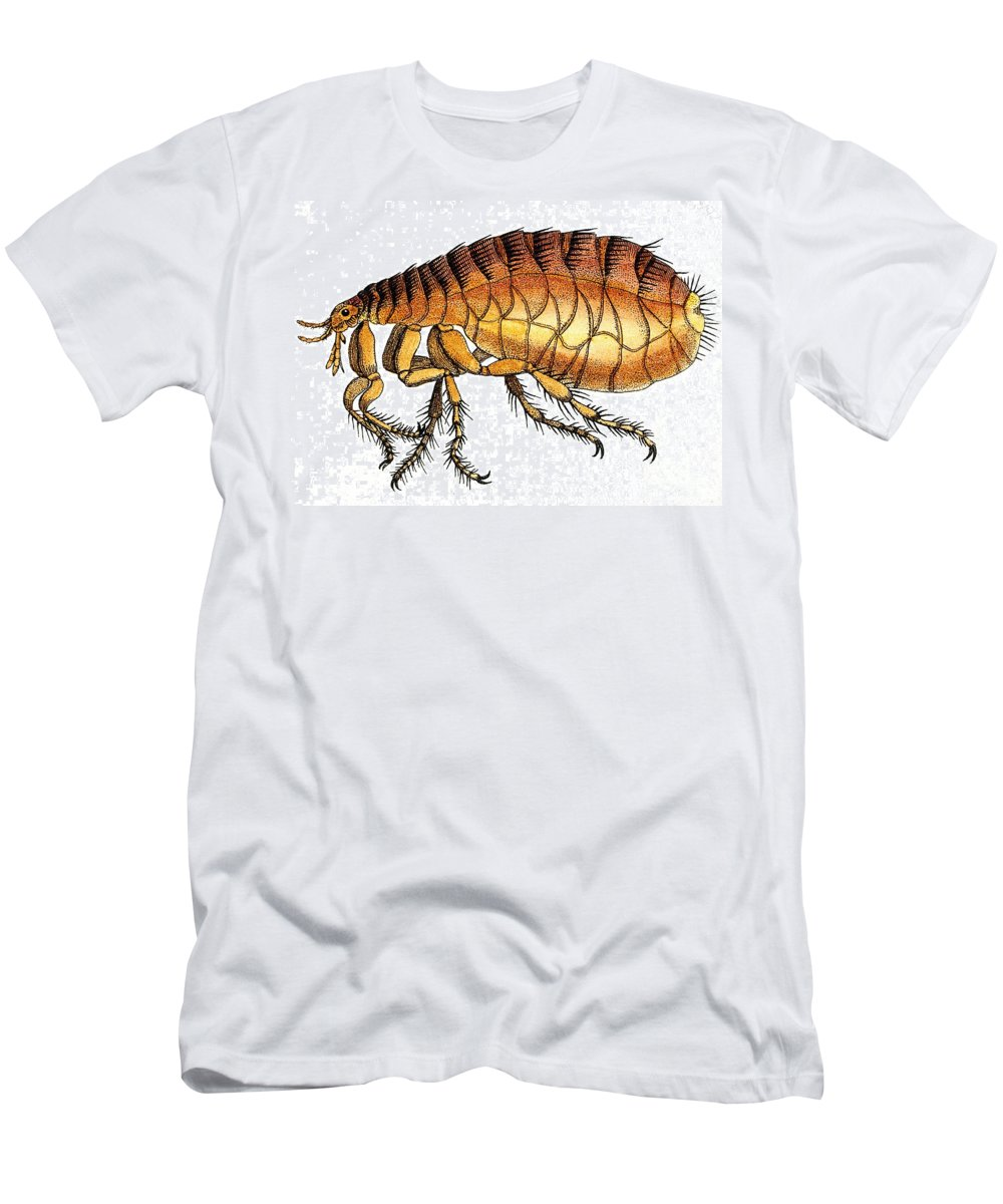 Historic Men's T-Shirt (Athletic Fit) featuring the photograph Dog Flea, Illustration by Wellcome Images