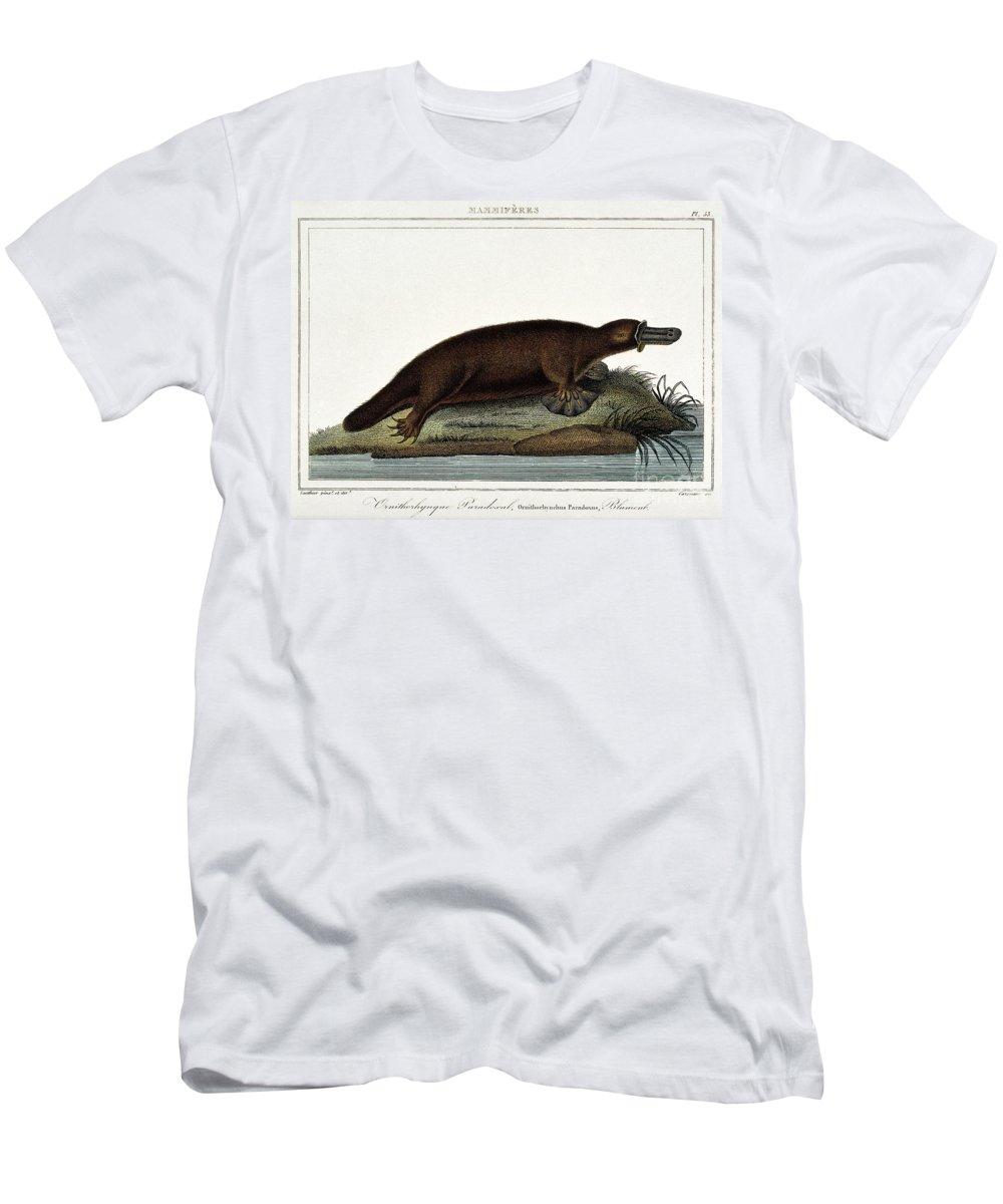 Historic Men's T-Shirt (Athletic Fit) featuring the photograph Duck-billed Platypus Ornithorhynchus by Wellcome Images