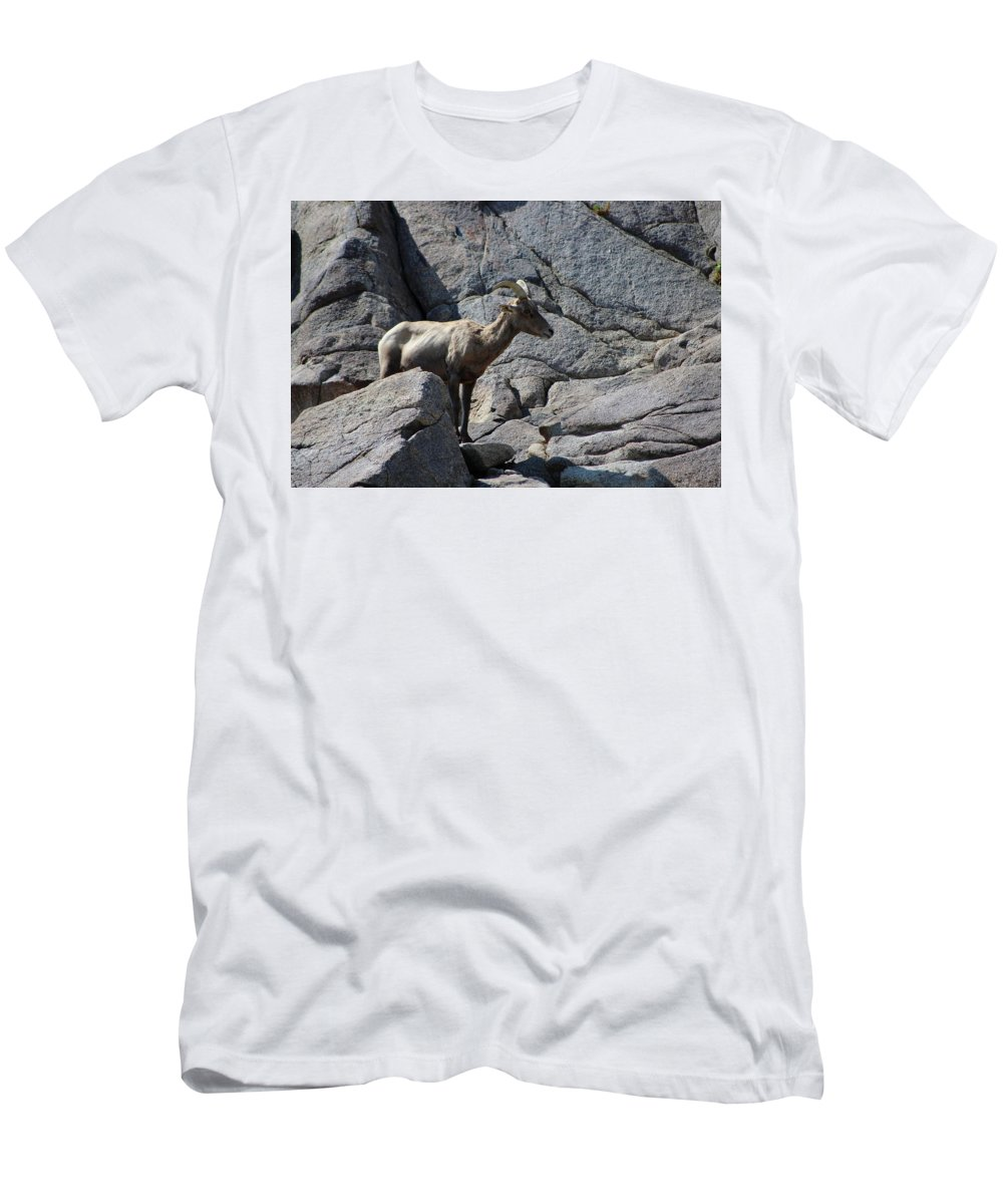Bighorn Sheep Lamb Men's T-Shirt (Athletic Fit) featuring the photograph Ewe Bighorn Sheep by Colleen Cornelius