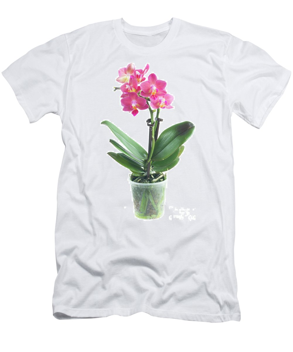 Orchid Men's T-Shirt (Athletic Fit) featuring the photograph Fresh Pink Orchid In Pot by Anastasy Yarmolovich