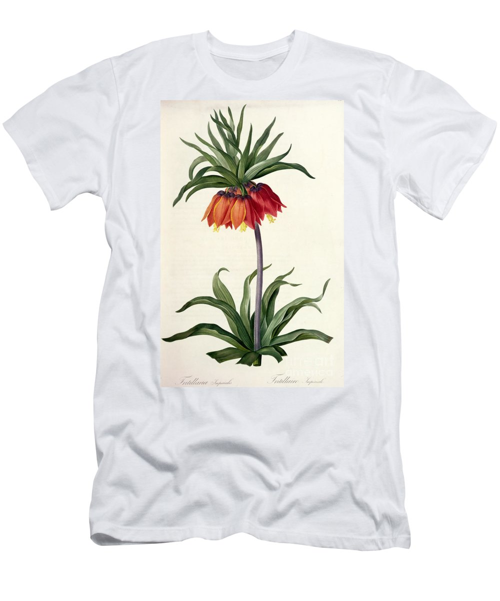 Fritillaria Men's T-Shirt (Athletic Fit) featuring the drawing Fritillaria Imperialis by Pierre Joseph Redoute