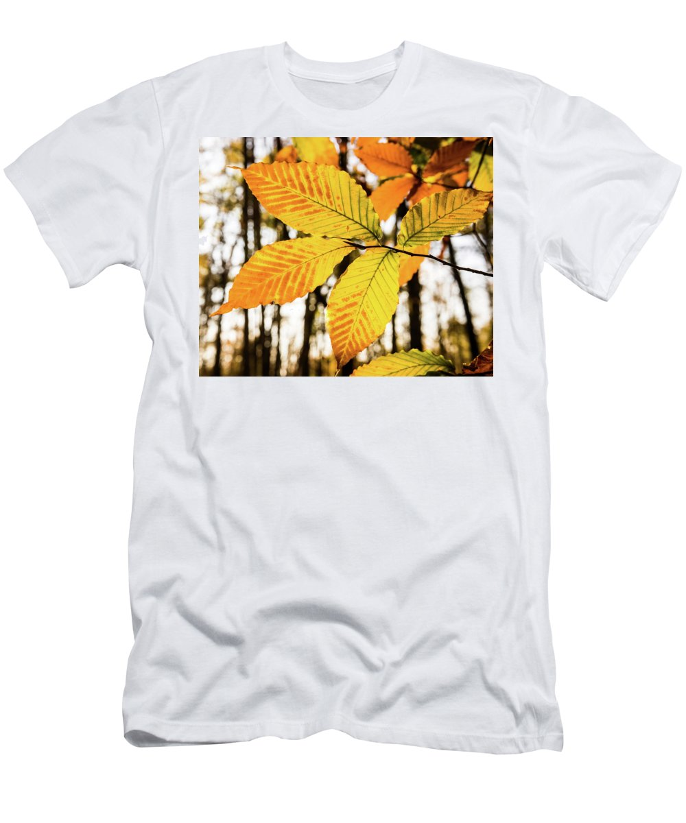 Beech Men's T-Shirt (Athletic Fit) featuring the photograph Glowing Beech Leaf Branch by Douglas Barnett
