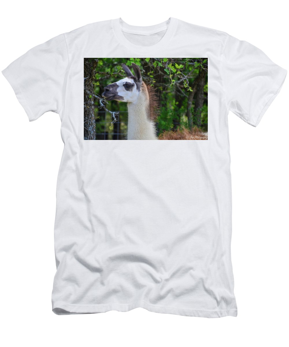 Fence Men's T-Shirt (Athletic Fit) featuring the photograph Hello Llama by Soni Macy