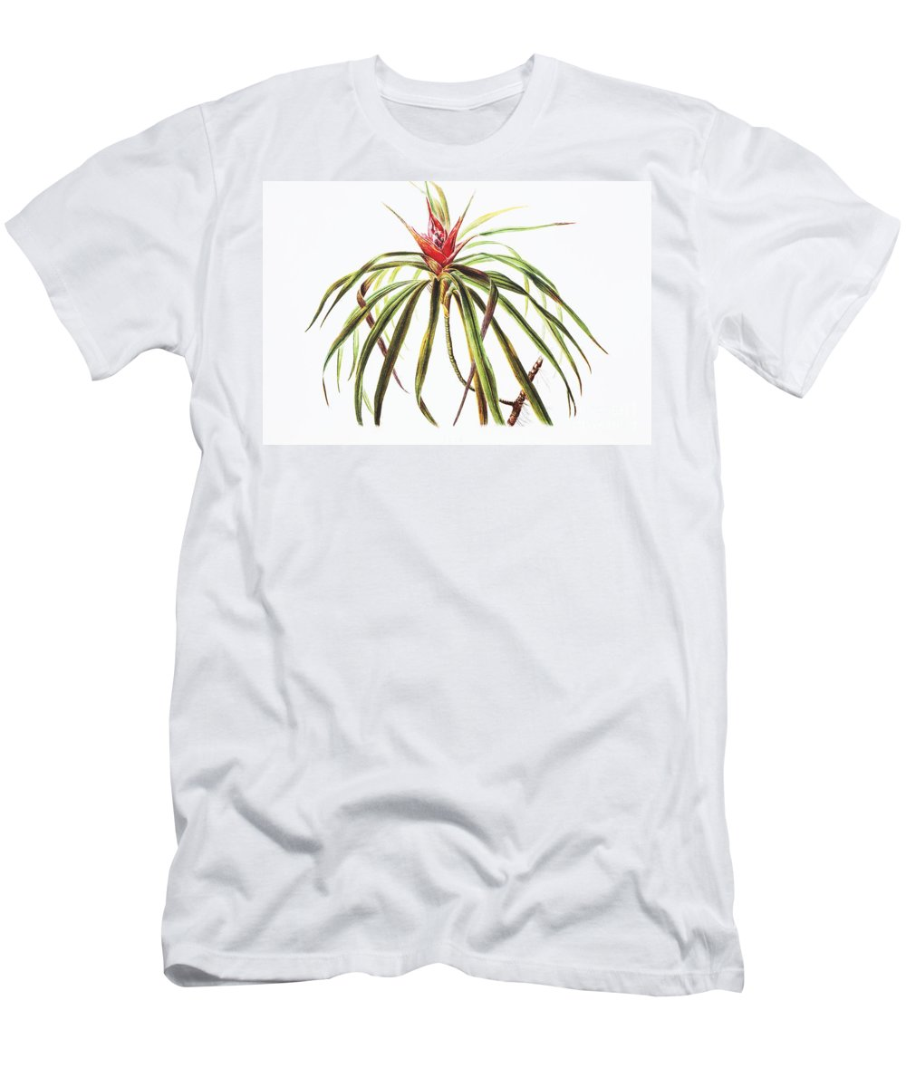 1885 Men's T-Shirt (Athletic Fit) featuring the painting Ieie Plant Art by Hawaiian Legacy Archive - Printscapes