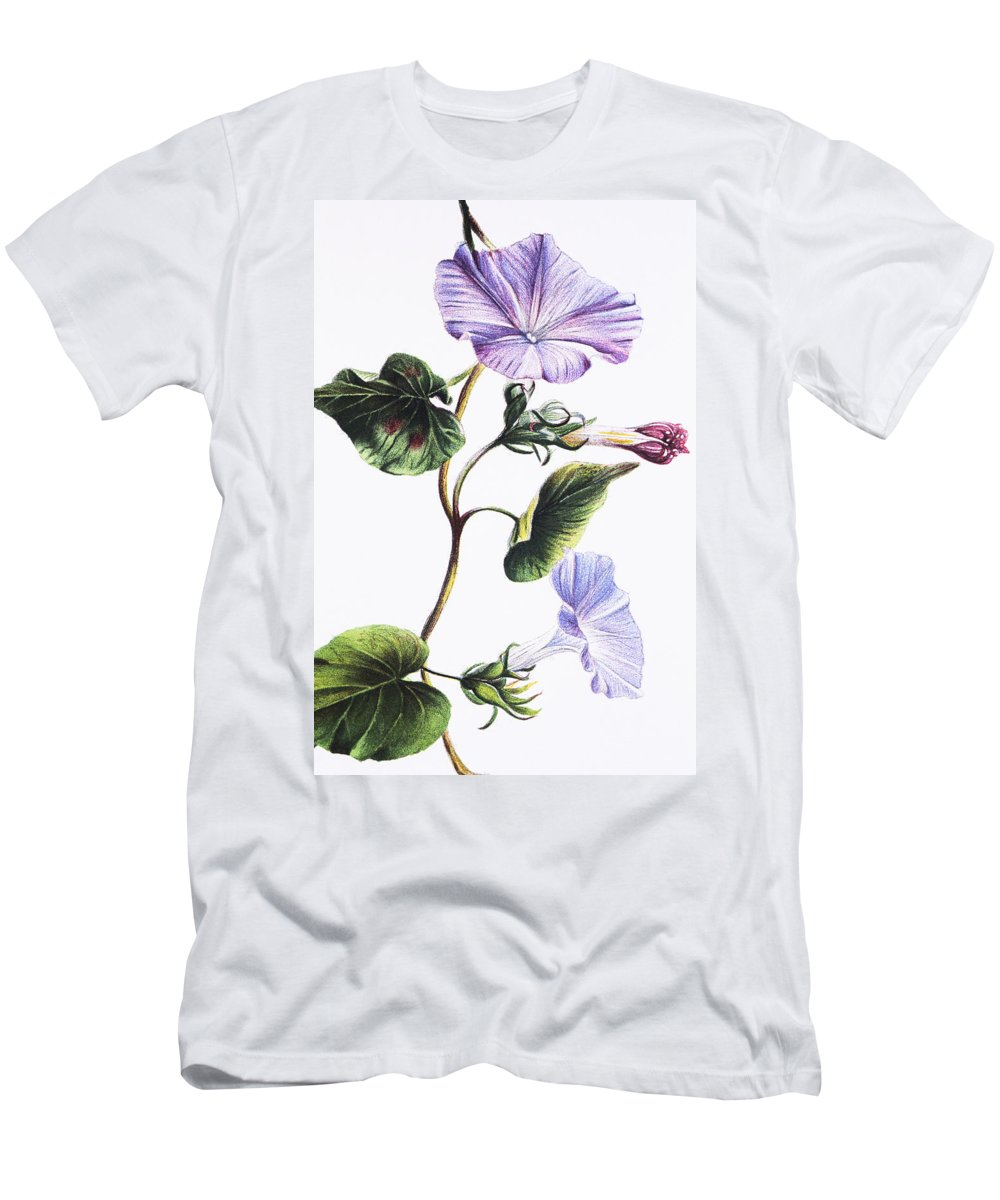 1885 Men's T-Shirt (Athletic Fit) featuring the painting Isabella Sinclair - Pohue by Hawaiian Legacy Archive - Printscapes