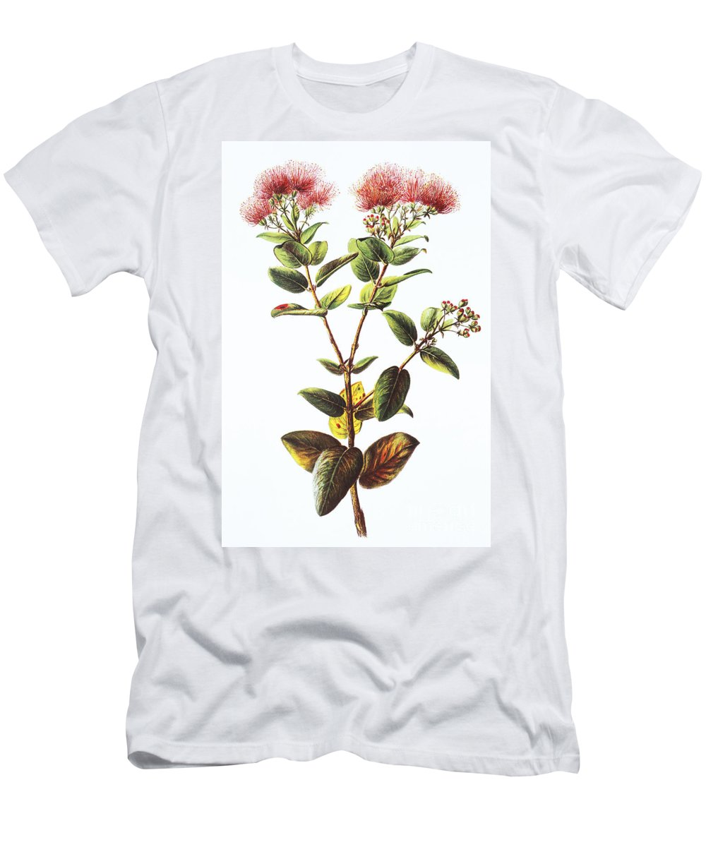 1885 Men's T-Shirt (Athletic Fit) featuring the painting Lehua Ohia Art by Hawaiian Legacy Archive - Printscapes