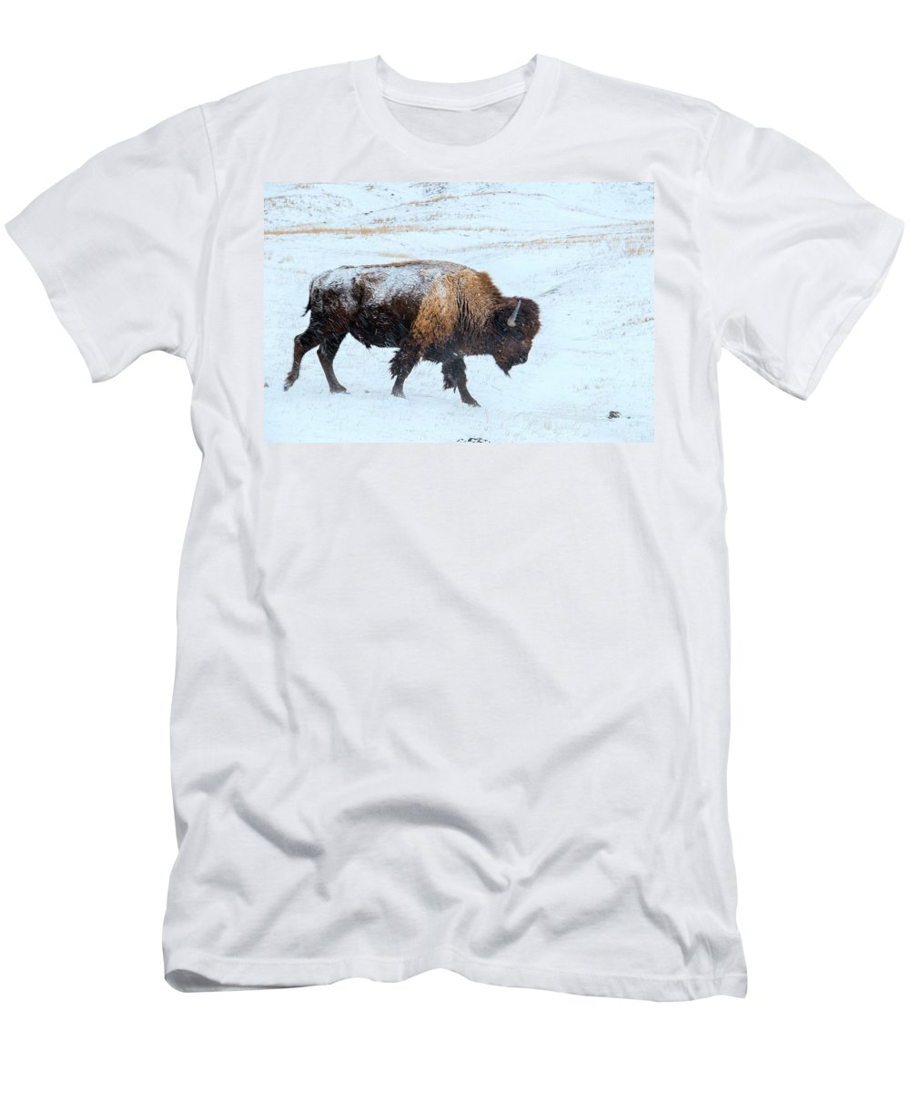 Buffalo Men's T-Shirt (Athletic Fit) featuring the photograph Loner by Derald Gross