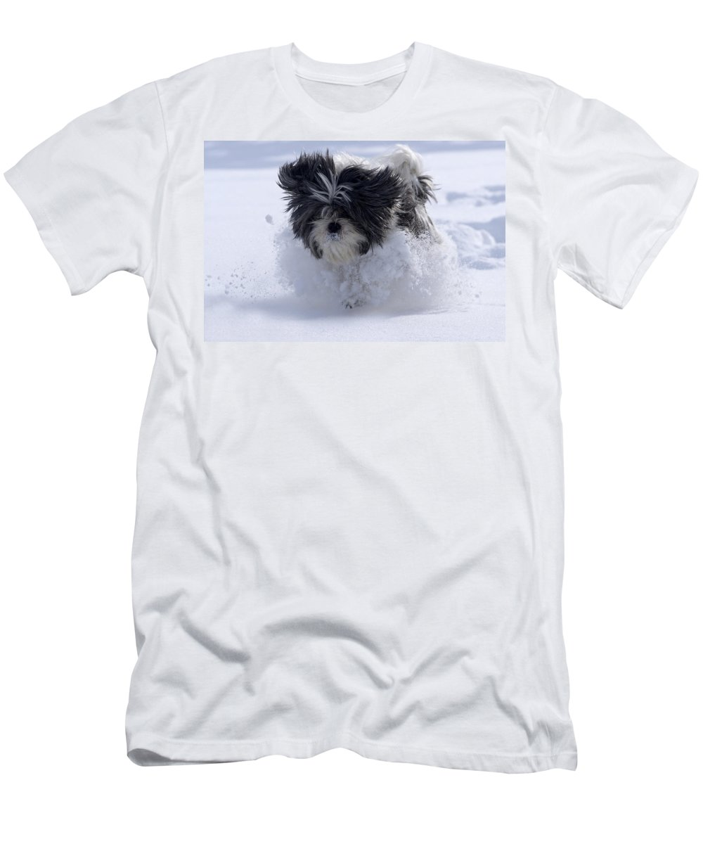 Snow Men's T-Shirt (Athletic Fit) featuring the photograph Misty Runs Through The Snow by Cliff Norton