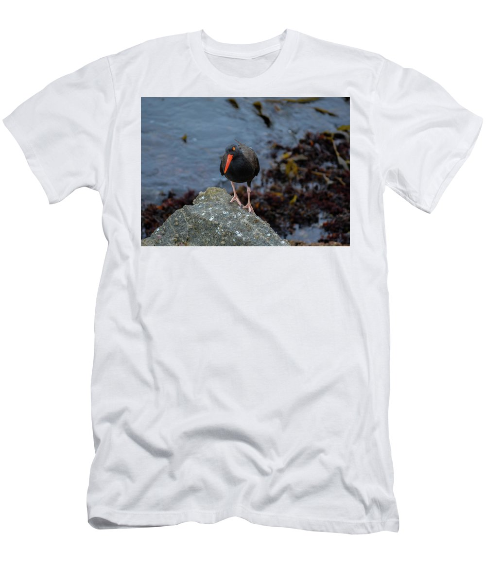 Monterey Men's T-Shirt (Athletic Fit) featuring the photograph Monterey Bird by Brian Stauffer
