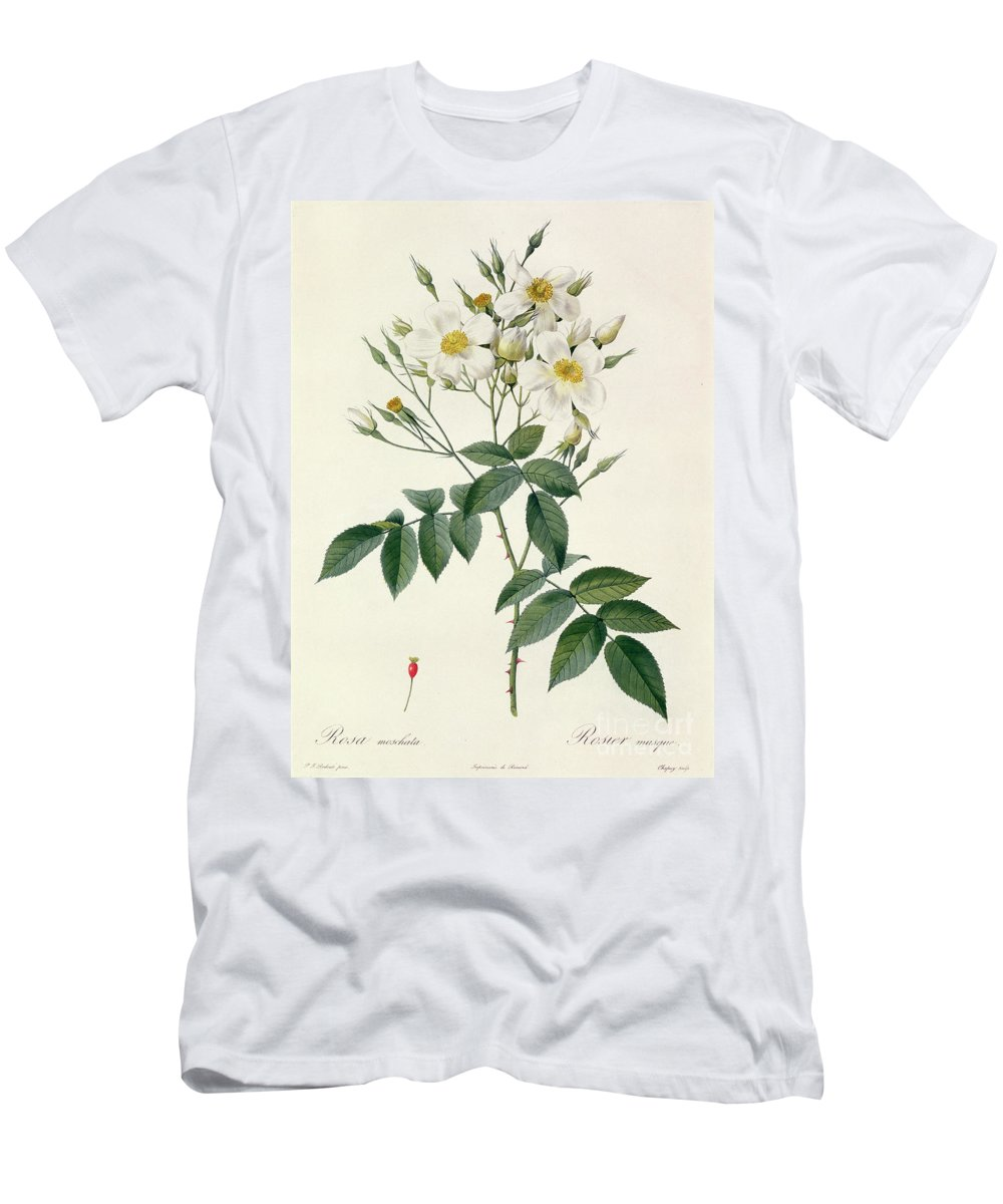 Rosa Men's T-Shirt (Athletic Fit) featuring the drawing Musk Rose by Pierre Joseph Redoute