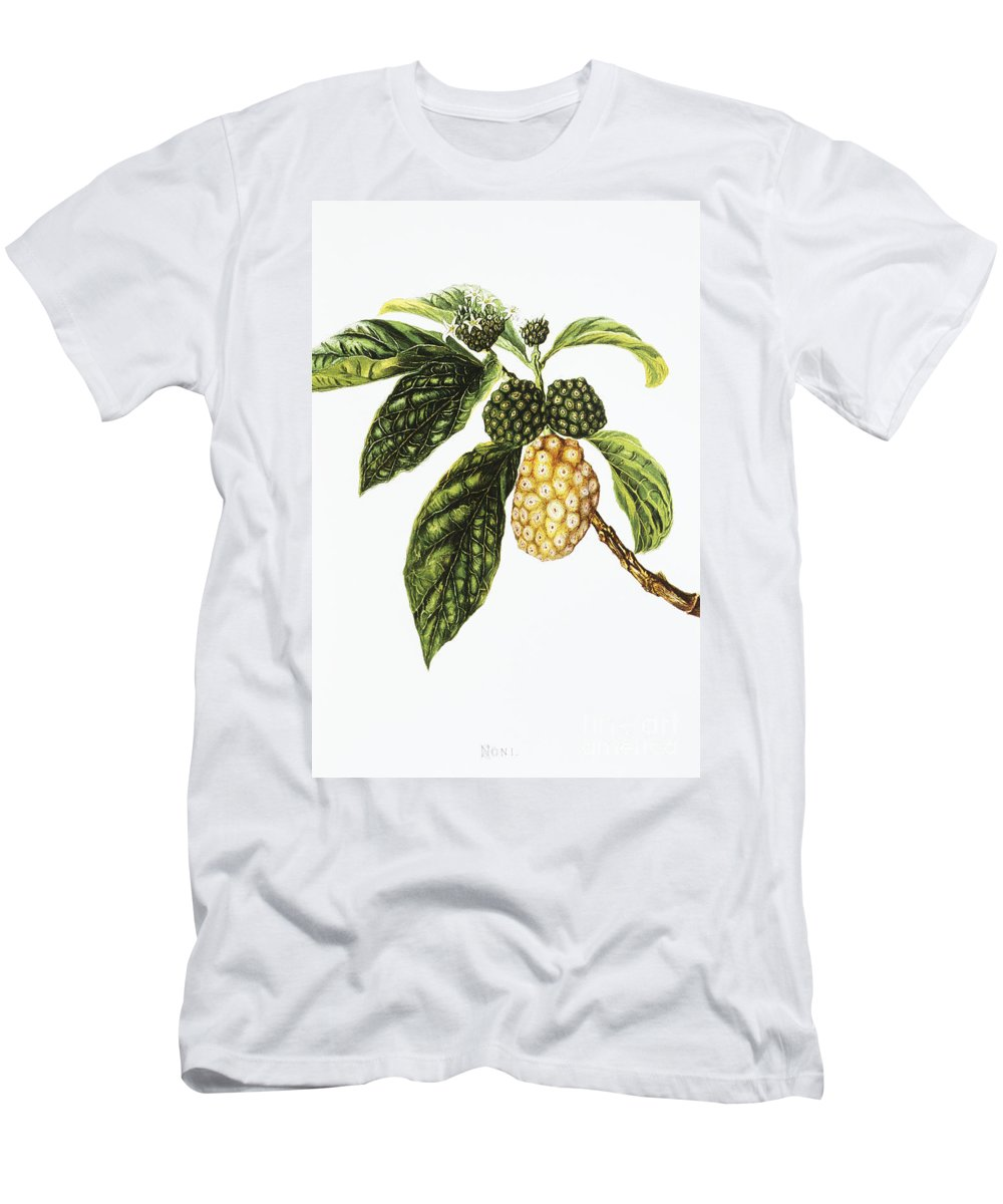 1890 Men's T-Shirt (Athletic Fit) featuring the painting Noni Fruit Art by Hawaiian Legacy Archive - Printscapes