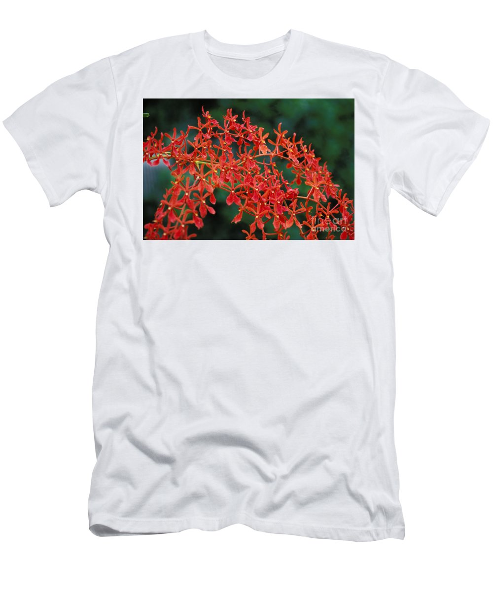 Attractive Men's T-Shirt (Athletic Fit) featuring the photograph Orchids by Gloria & Richard Maschmeyer - Printscapes