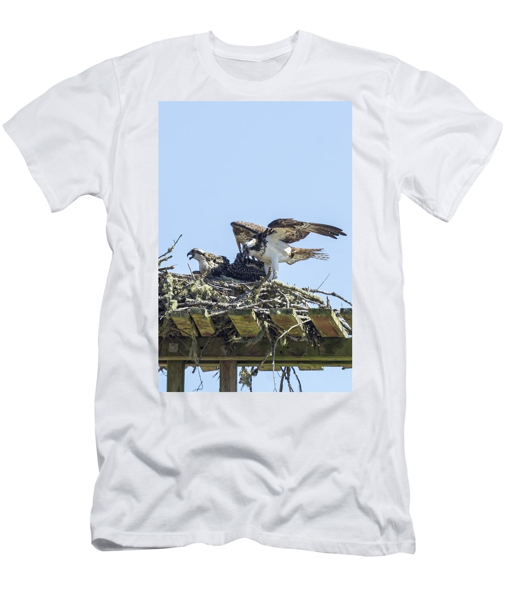 Osprey Men's T-Shirt (Athletic Fit) featuring the photograph Osprey Family Portrait No. 1 by Belinda Greb