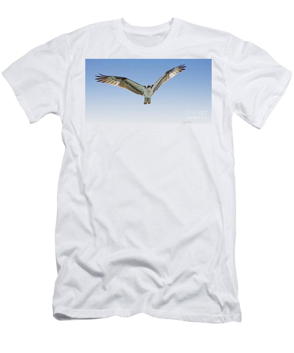 Osprey Men's T-Shirt (Athletic Fit) featuring the photograph Osprey Soar Search by Deborah Benoit