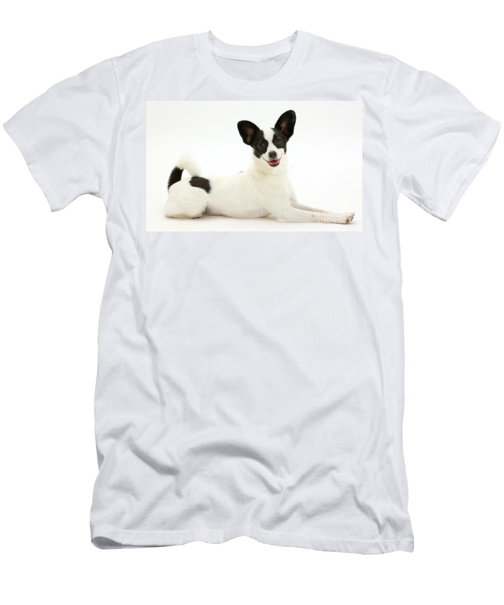 Nature Men's T-Shirt (Athletic Fit) featuring the photograph Papillon X Jack Russell Terrier Dog by Mark Taylor