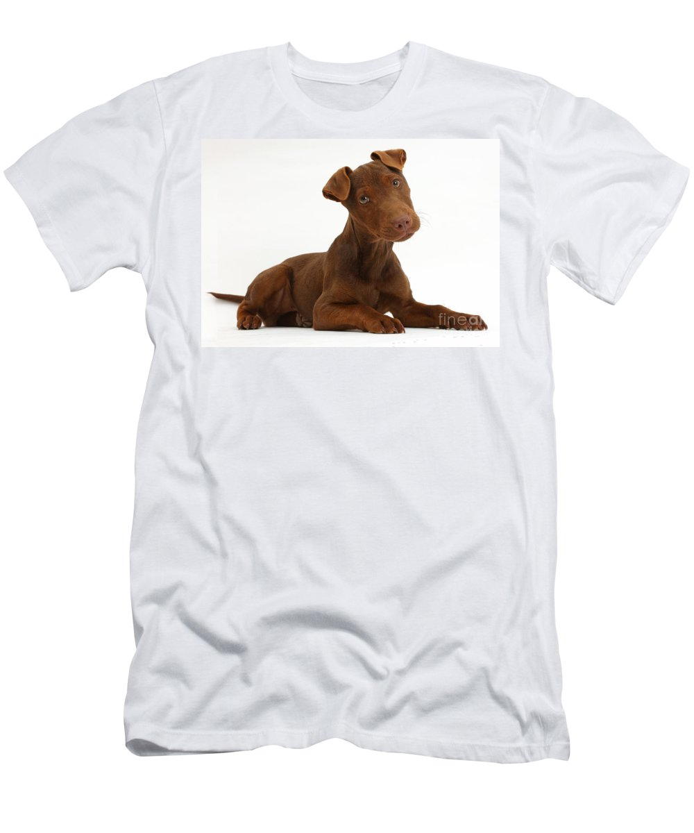 Patterdale Terrier Puppy Men's T-Shirt (Athletic Fit) featuring the photograph Patterdale Terrier Puppy by Mark Taylor
