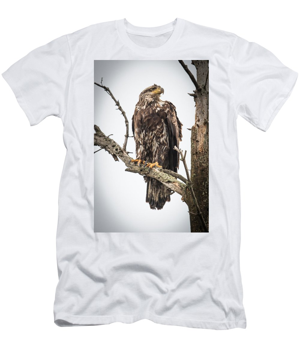 Bald Eagle Men's T-Shirt (Athletic Fit) featuring the photograph Perched Juvenile Eagle by Paul Freidlund
