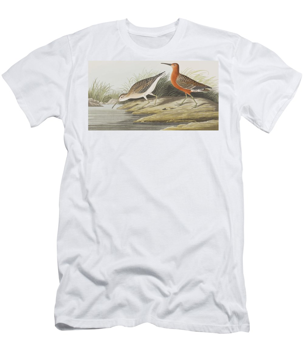 Pigmy Curlew Men's T-Shirt (Athletic Fit) featuring the painting Pigmy Curlew by John James Audubon