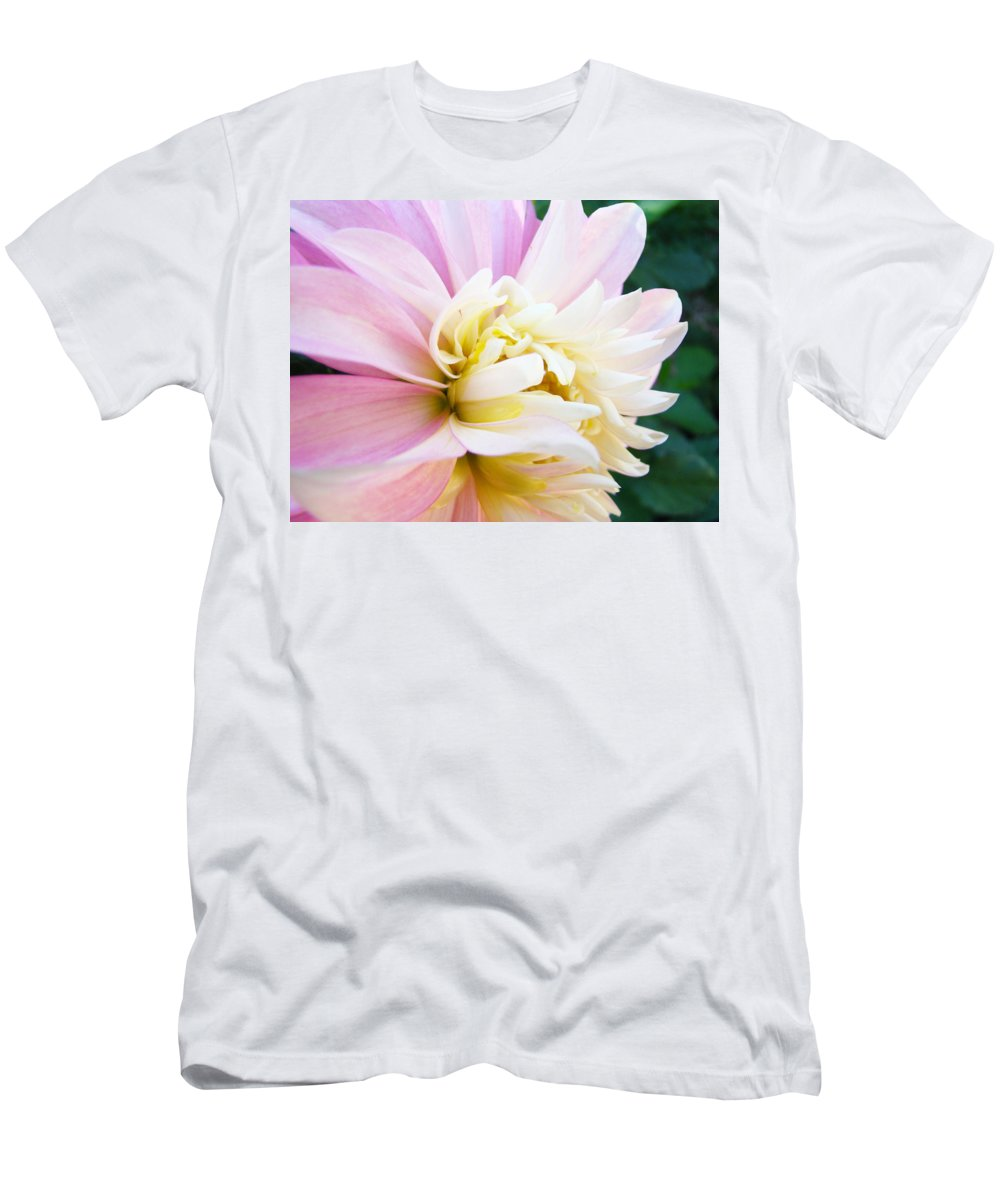 Dahlia Men's T-Shirt (Athletic Fit) featuring the photograph Pink White Dahlia Flower Soft Pastels Art Print Canvas Baslee Troutman by Baslee Troutman