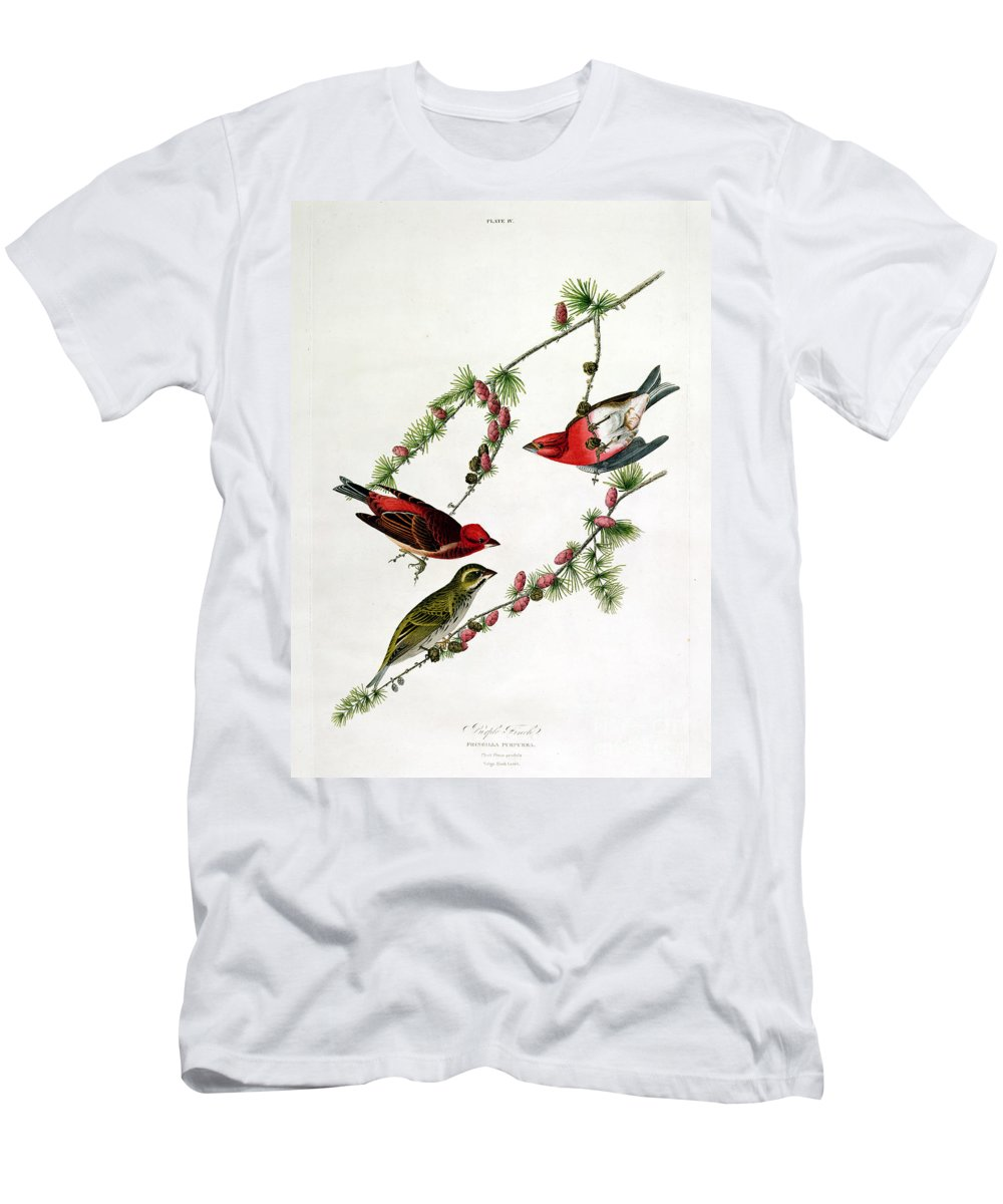 Purple Finch Men's T-Shirt (Athletic Fit) featuring the painting Purple Finch by John James Audubon