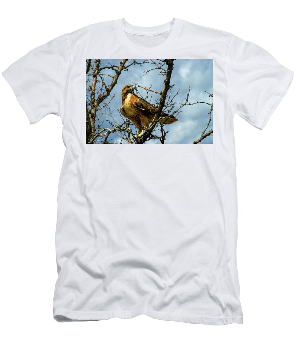 Hawk T-Shirt featuring the photograph Red-Tailed Hawk by Alana Thrower