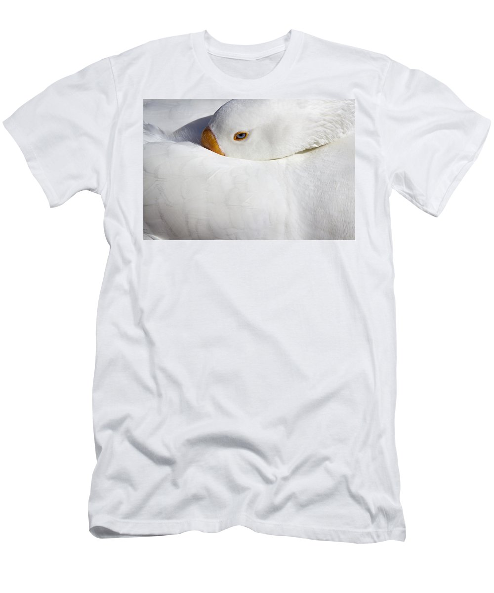 Goose Men's T-Shirt (Athletic Fit) featuring the photograph Resting White Goose by Phyllis Denton