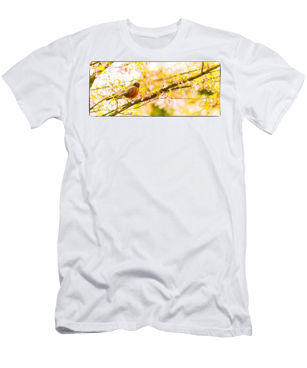 Animal Men's T-Shirt (Athletic Fit) featuring the photograph Robin In Spring Blossom Cherry Tree by Peter v Quenter