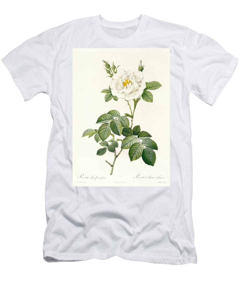 Rosa Men's T-Shirt (Athletic Fit) featuring the drawing Rosa Alba Flore Pleno by Pierre Joseph Redoute