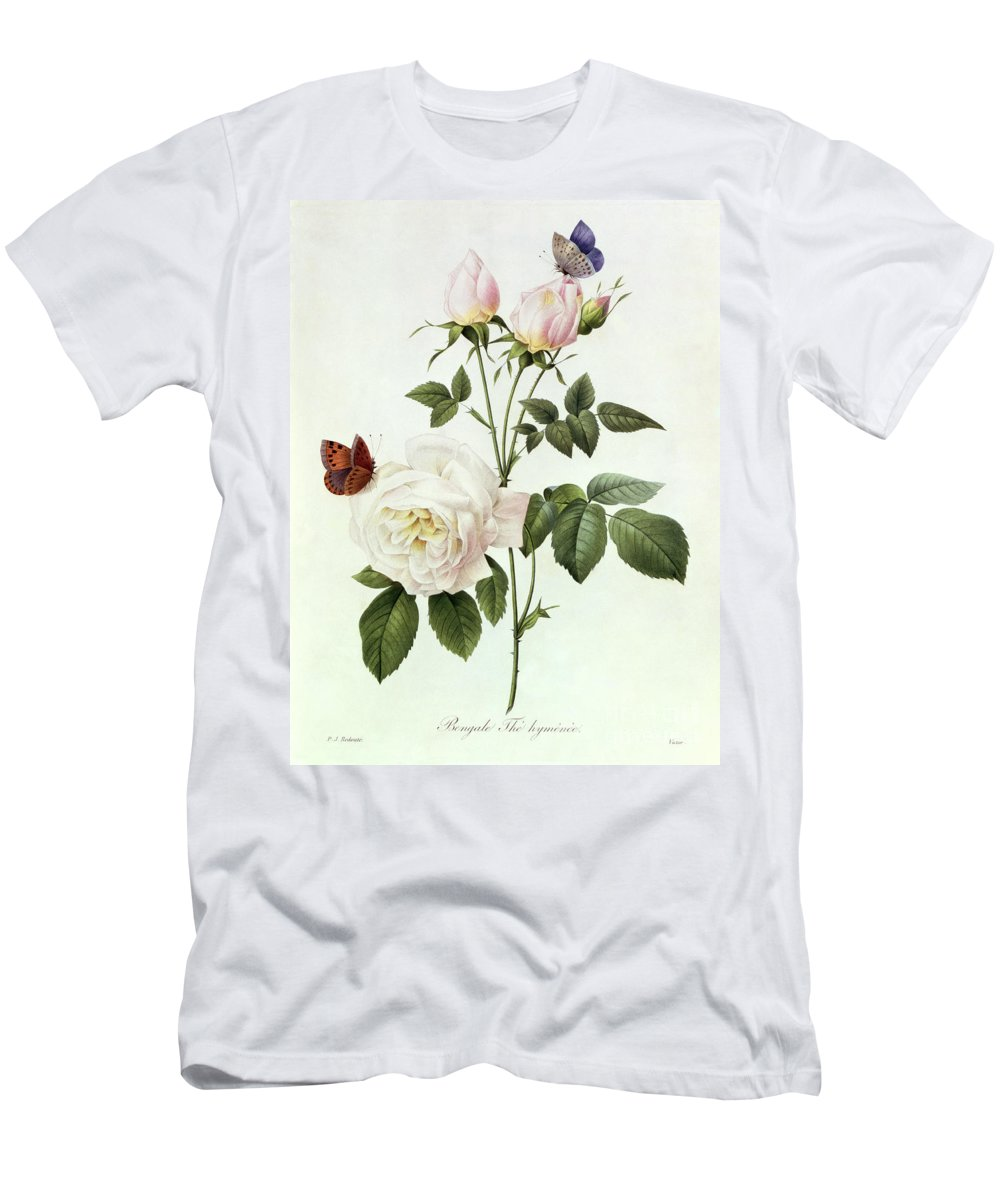 Rosa Men's T-Shirt (Athletic Fit) featuring the painting Rosa Bengale The Hymenes by Pierre Joseph Redoute