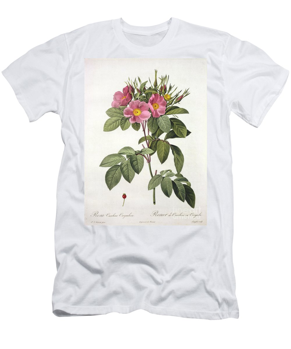 Rosa Men's T-Shirt (Athletic Fit) featuring the drawing Rosa Carolina Corymbosa by Pierre Joseph Redoute