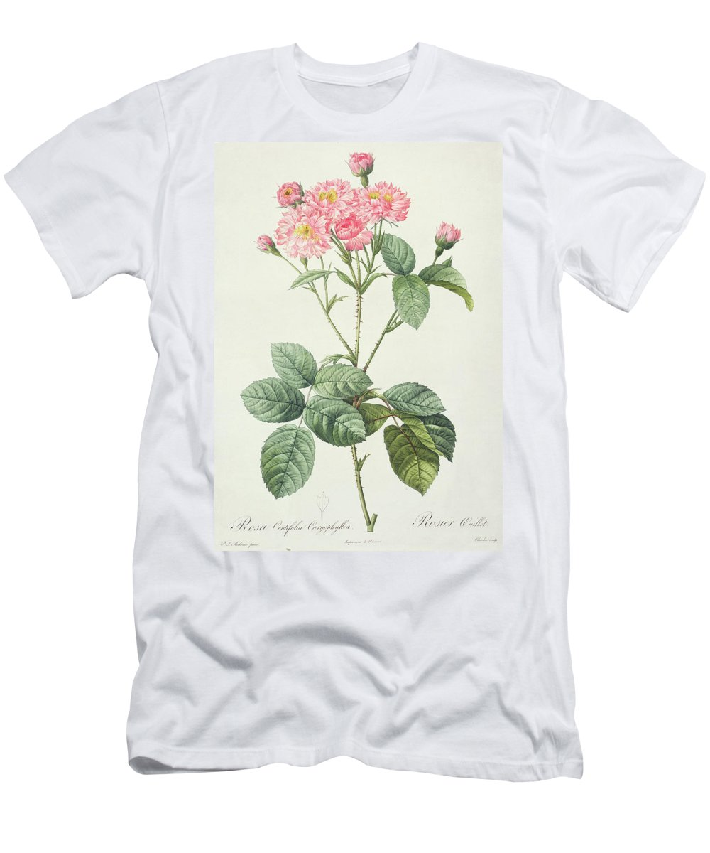 Rosa Men's T-Shirt (Athletic Fit) featuring the drawing Rosa Centifolia Caryophyllea by Pierre Joseph Redoute