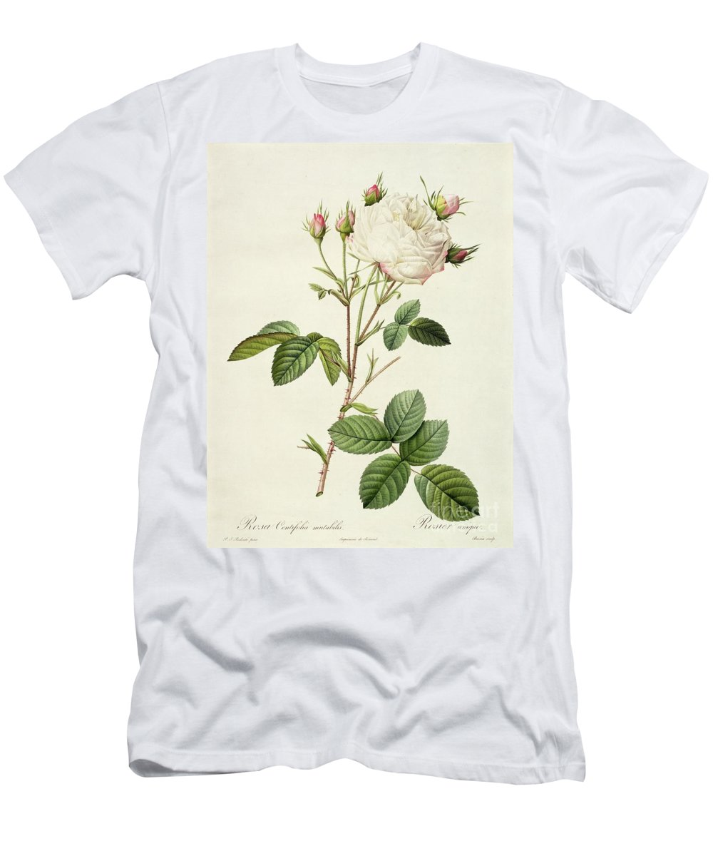 Rosa Men's T-Shirt (Athletic Fit) featuring the drawing Rosa Centifolia Mutabilis by Pierre Joseph Redoute
