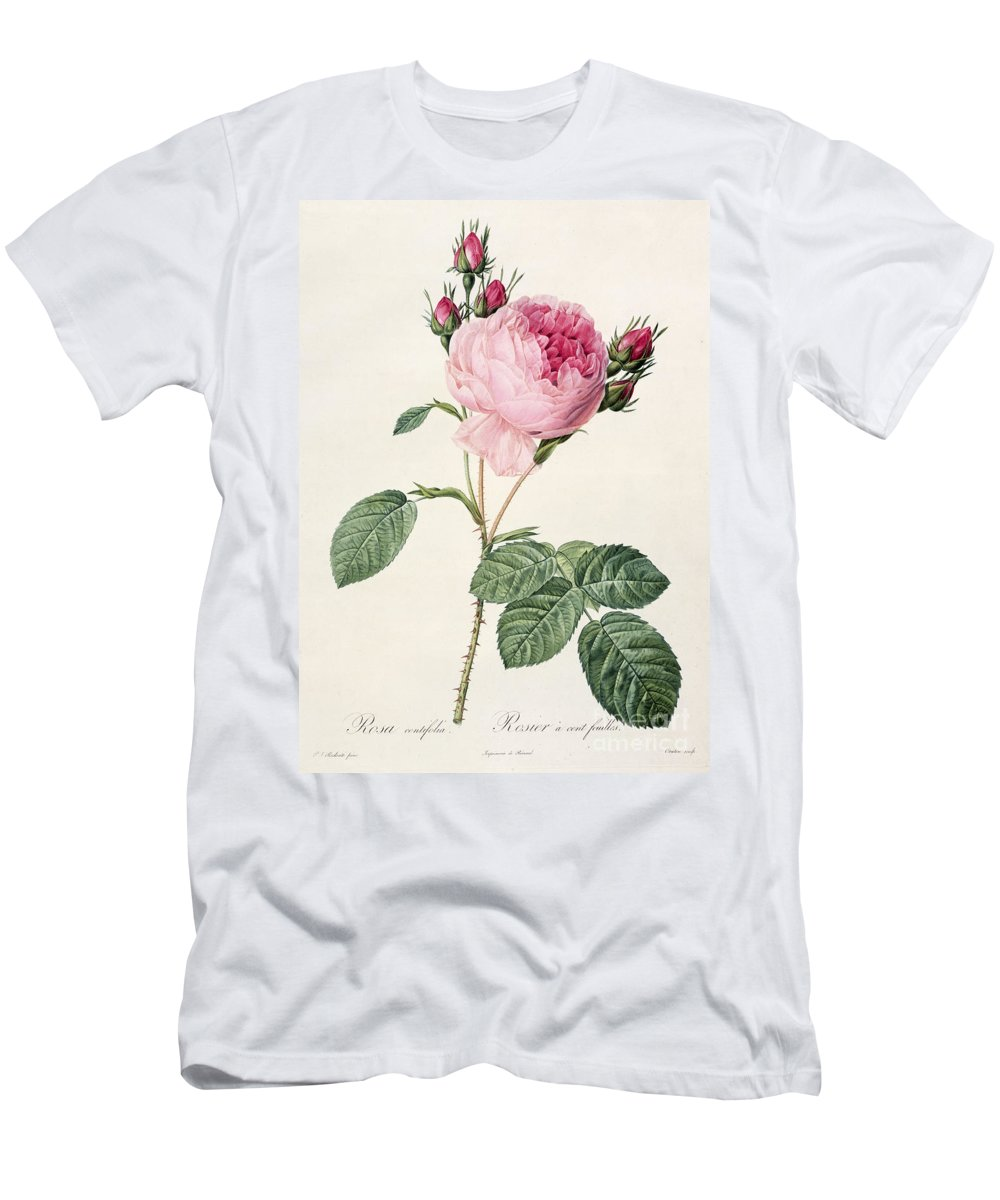 Rosa Men's T-Shirt (Athletic Fit) featuring the drawing Rosa Centifolia by Pierre Joseph Redoute