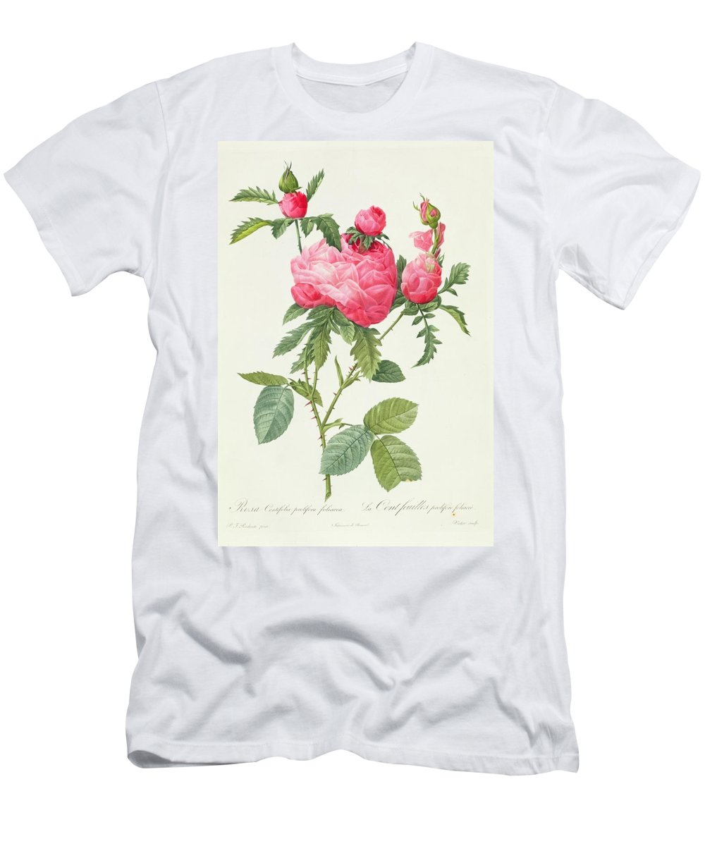 Rosa Men's T-Shirt (Athletic Fit) featuring the drawing Rosa Centifolia Prolifera Foliacea by Pierre Joseph Redoute
