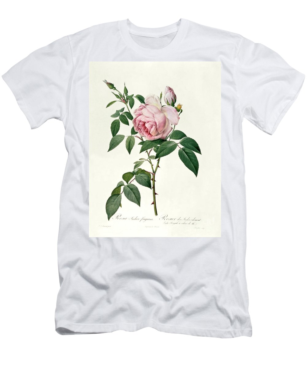 Rosa Men's T-Shirt (Athletic Fit) featuring the drawing Rosa Chinensis And Rosa Gigantea by Joseph Pierre Redoute