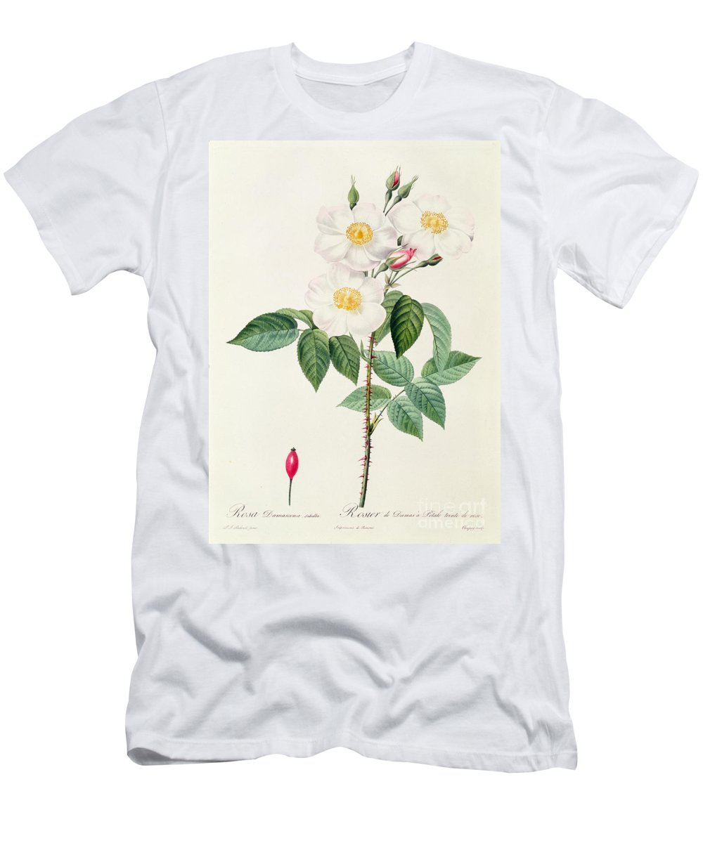 Rosa Men's T-Shirt (Athletic Fit) featuring the drawing Rosa Damascena Subalba by Pierre Joseph Redoute