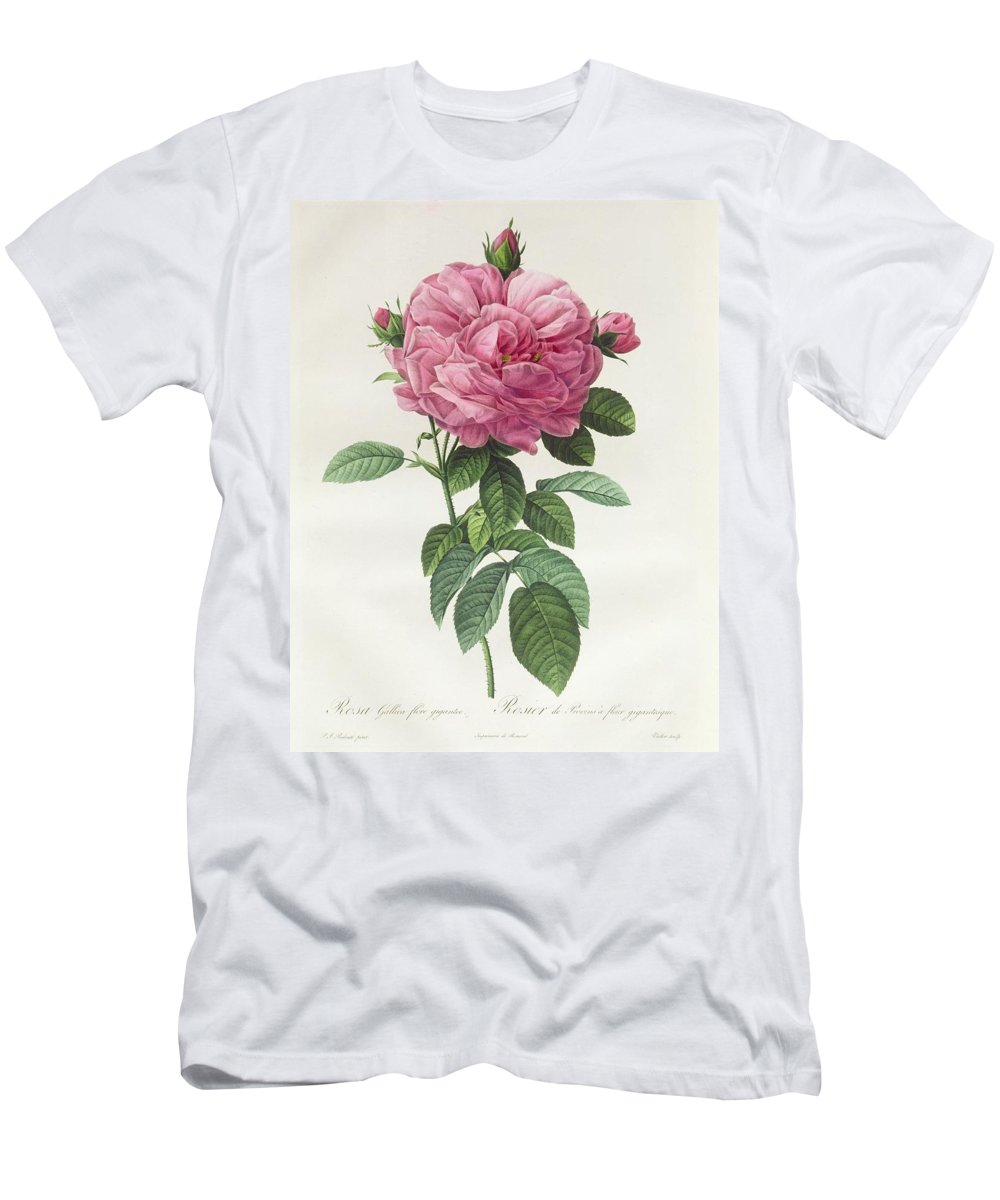 Rosa Men's T-Shirt (Athletic Fit) featuring the drawing Rosa Gallica Flore Giganteo by Pierre Joseph Redoute
