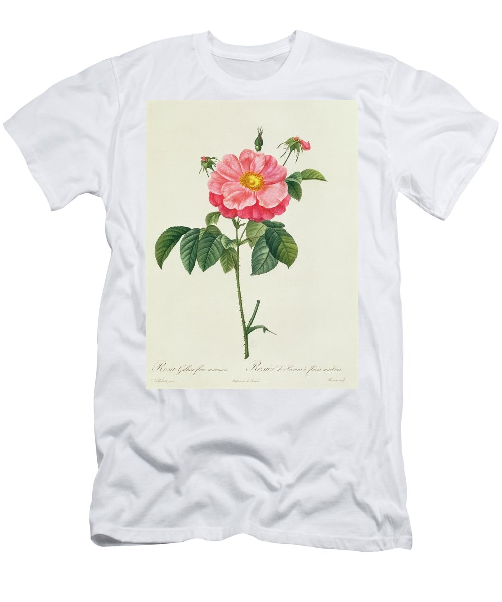 Rosa Men's T-Shirt (Athletic Fit) featuring the drawing Rosa Gallica Flore Marmoreo by Pierre Joseph Redoute