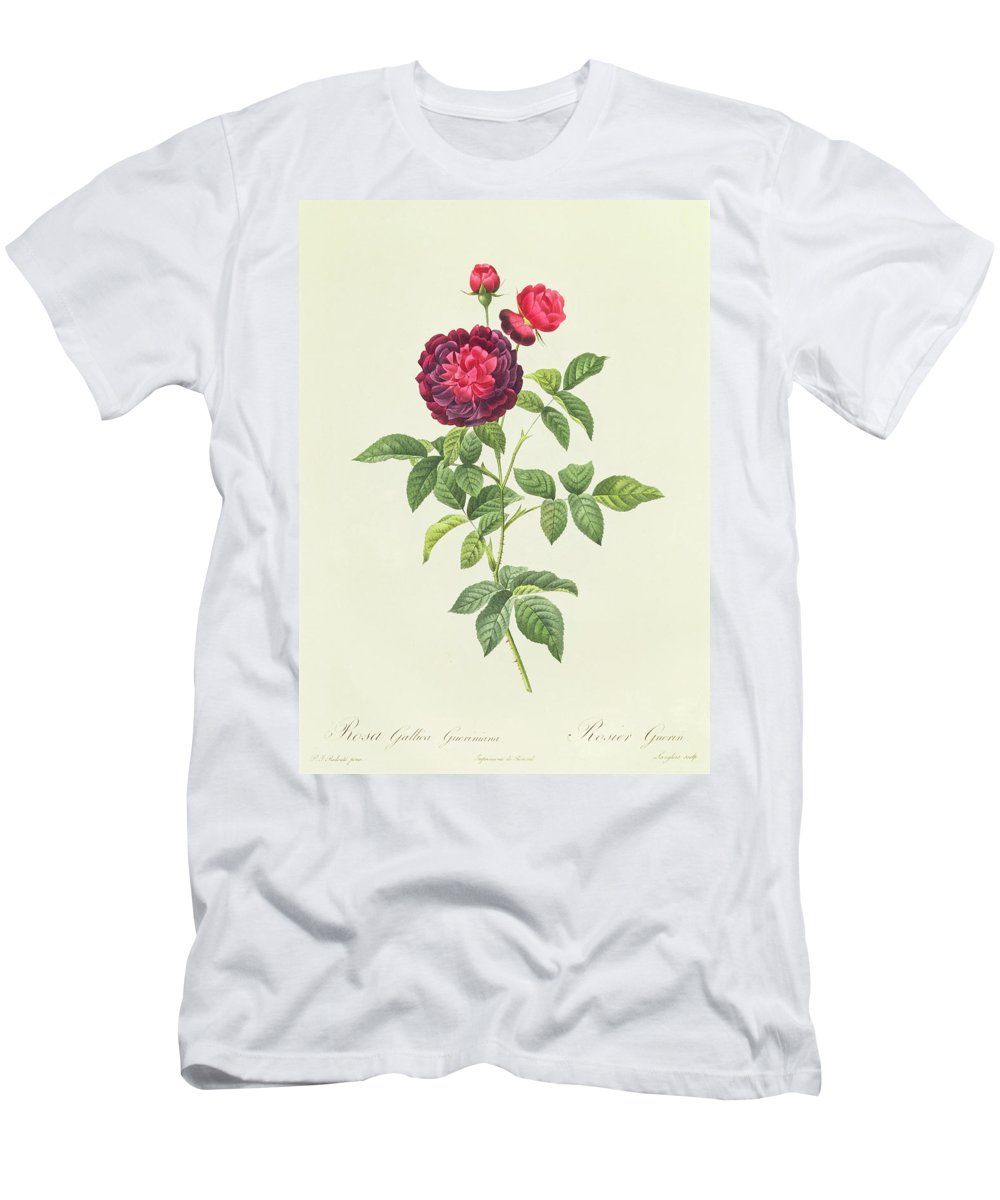 Rosa Men's T-Shirt (Athletic Fit) featuring the drawing Rosa Gallica Gueriniana by Pierre Joseph Redoute