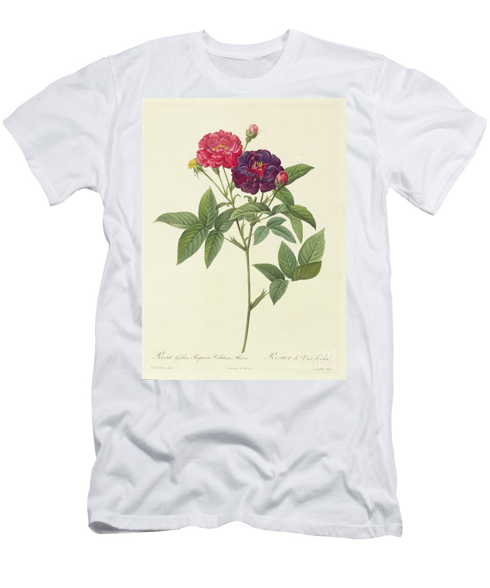 Rosa Men's T-Shirt (Athletic Fit) featuring the drawing Rosa Gallica Purpurea Velutina by Pierre Joseph Redoute