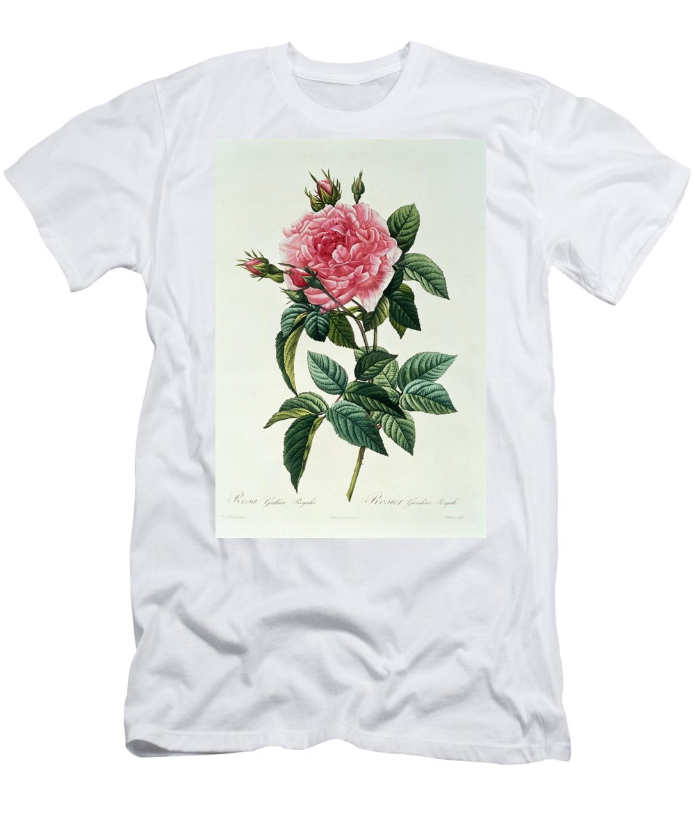Rosa Men's T-Shirt (Athletic Fit) featuring the drawing Rosa Gallica Regalis by Pierre Joseph Redoute