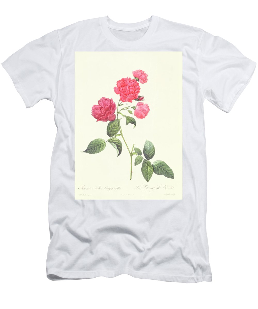 Rosa Men's T-Shirt (Athletic Fit) featuring the drawing Rosa Indica Caryophyllea by Pierre Joseph Redoute