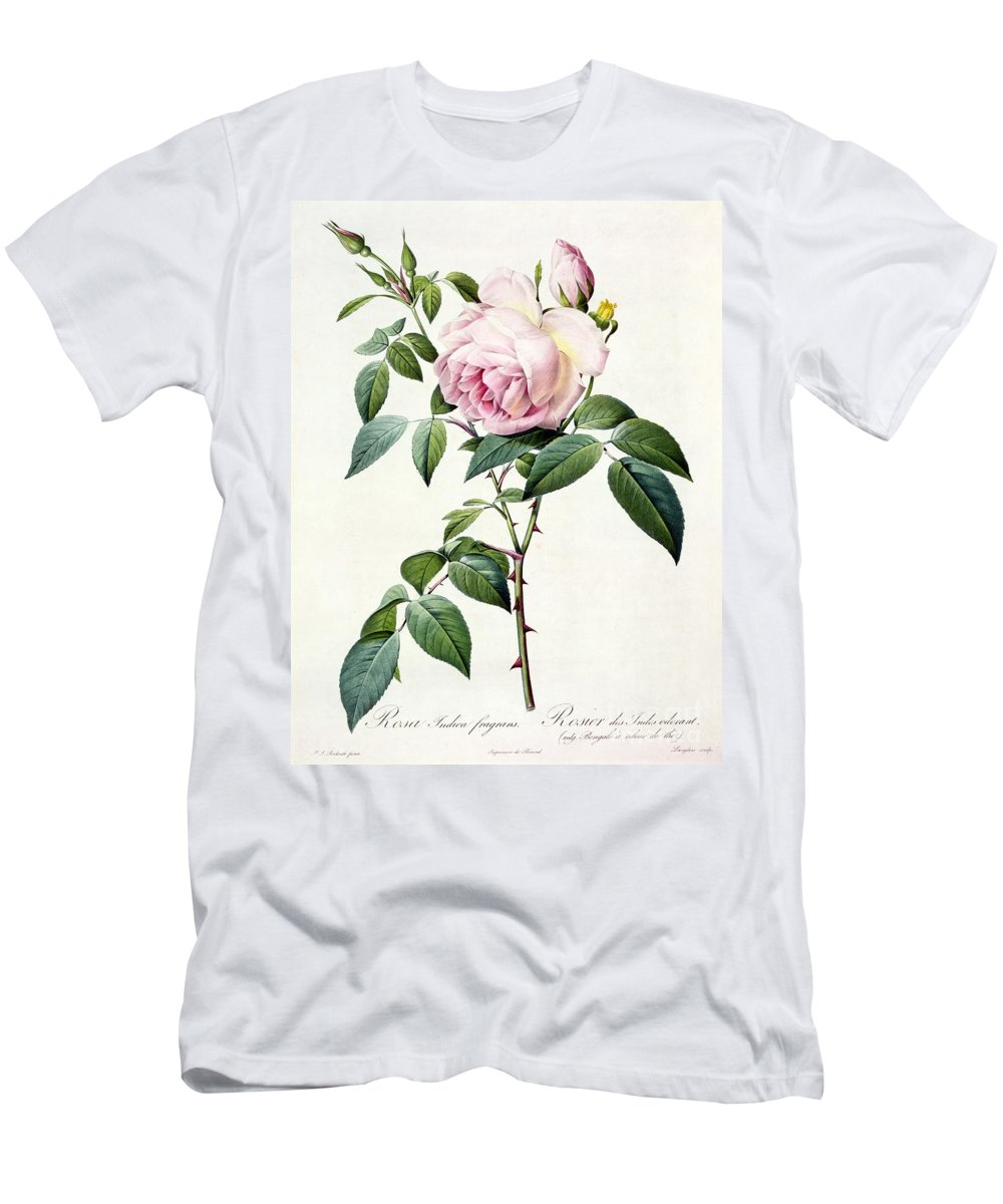 Rosa Men's T-Shirt (Athletic Fit) featuring the drawing Rosa Indica Fragrans by Pierre Joseph Redoute