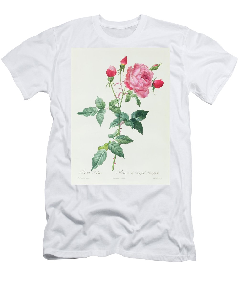 Rosa Men's T-Shirt (Athletic Fit) featuring the drawing Rosa Indica by Pierre Joseph Redoute