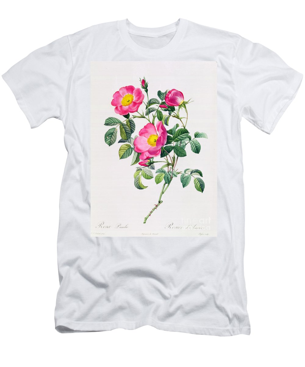 Rosa Men's T-Shirt (Athletic Fit) featuring the drawing Rosa Lumila by Pierre Joseph Redoute