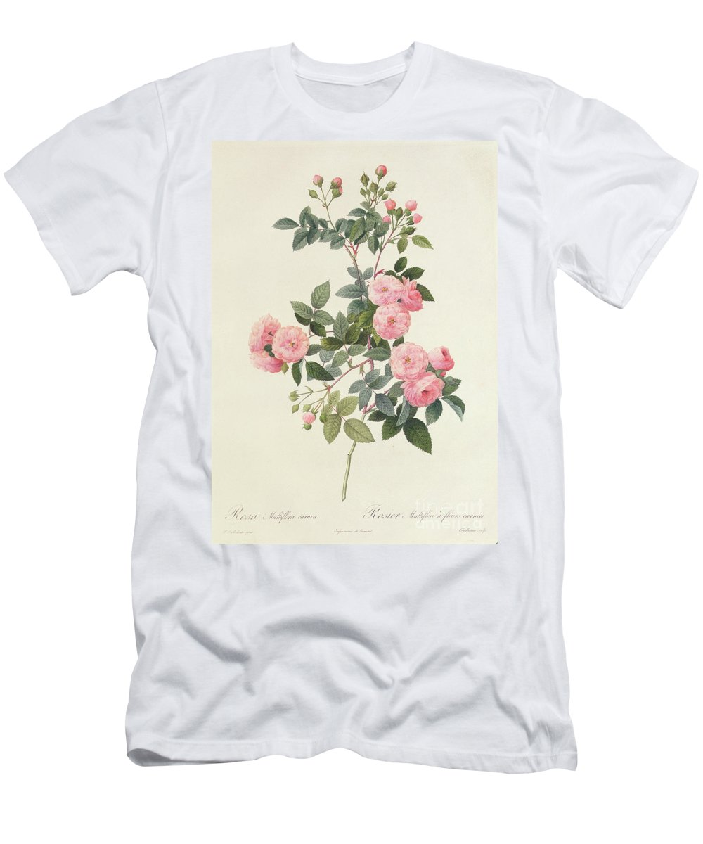 Rosa Men's T-Shirt (Athletic Fit) featuring the drawing Rosa Multiflora Carnea by Pierre Joseph Redoute