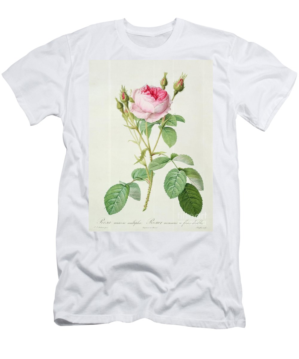 Rosa Men's T-Shirt (Athletic Fit) featuring the drawing Rosa Muscosa Multiplex by Pierre Joseph Redoute