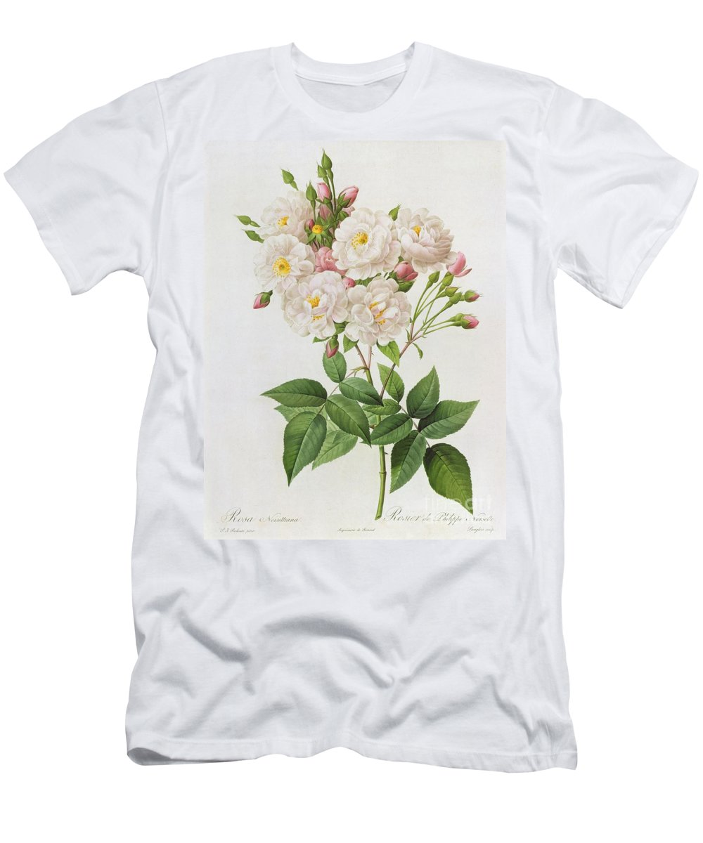 Rosa Men's T-Shirt (Athletic Fit) featuring the painting Rosa Noisettiana by Pierre Joseph Redoute