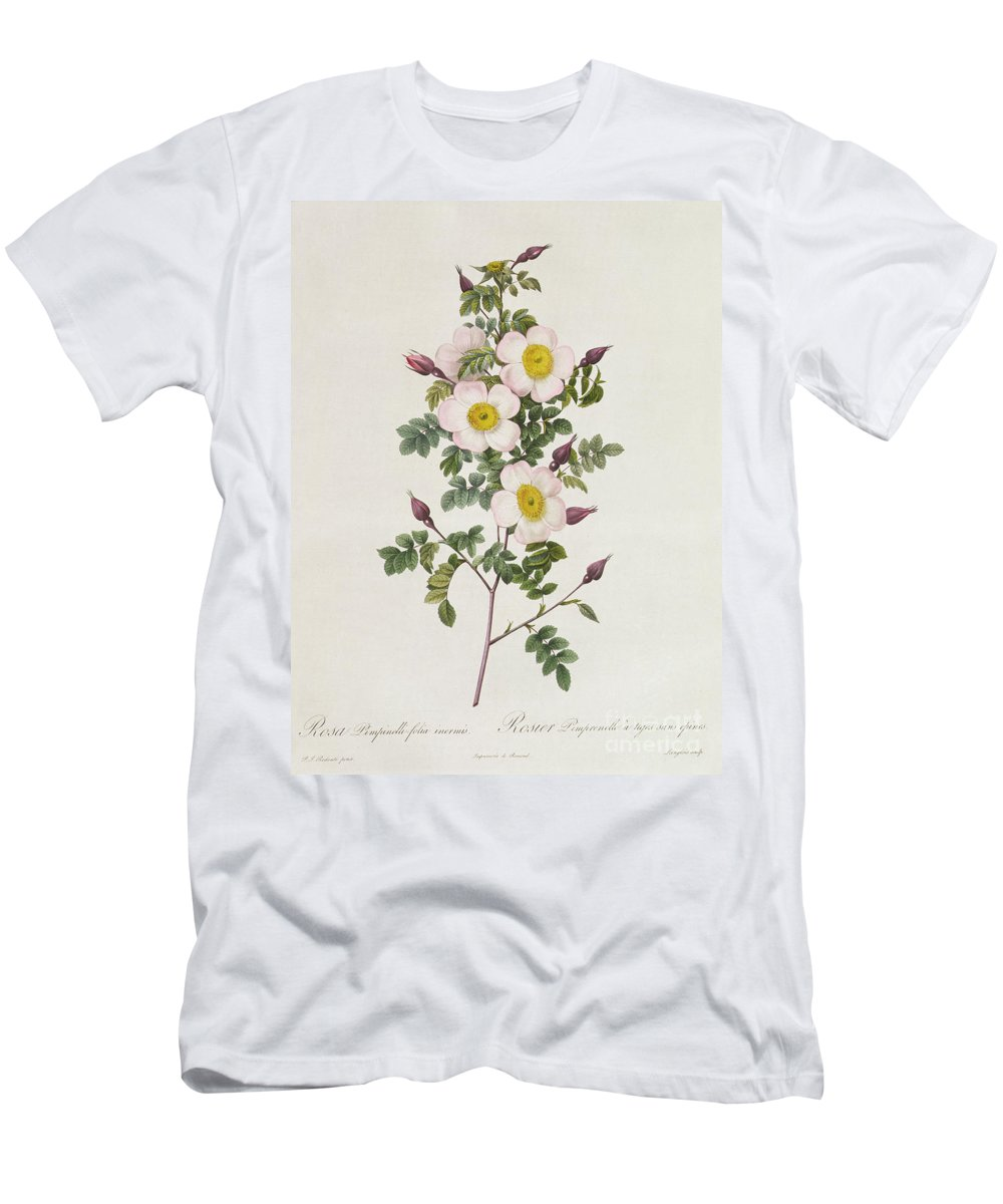 Rosa Men's T-Shirt (Athletic Fit) featuring the drawing Rosa Pimpinelli Folia Inermis by Pierre Joseph Redoute