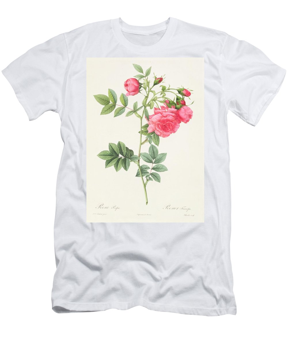 Rosa Men's T-Shirt (Athletic Fit) featuring the drawing Rosa Pimpinellifolia Flore Variegato by Pierre Joseph Redoute
